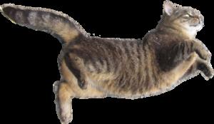 cat float1